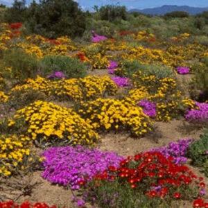 Africa Botanics Category Image